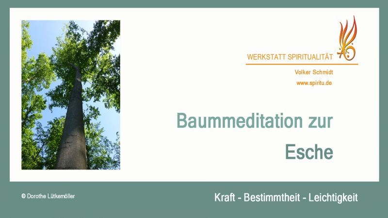 tl_files/images/Baummeditation Esche Titel Chart.jpg